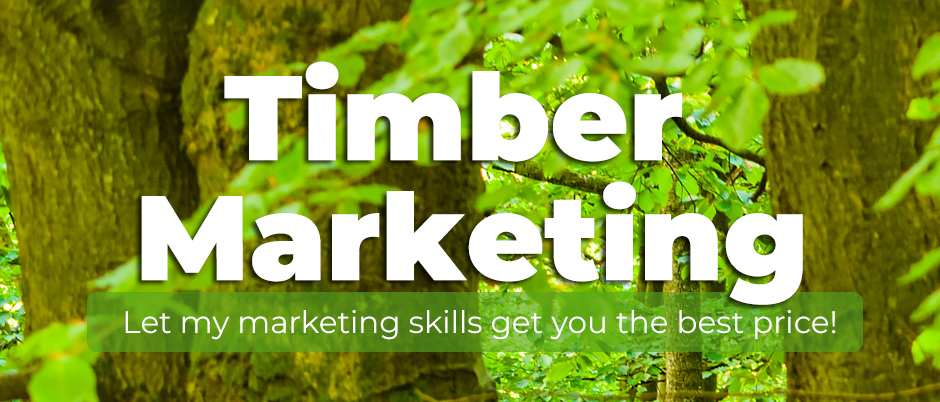 timber marketing